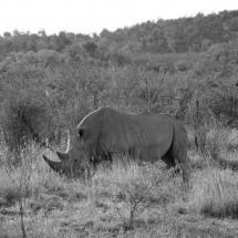 Madikwe - juillet 2016
